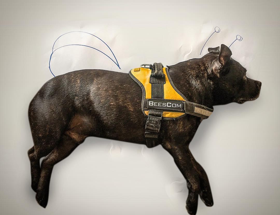 photo de gaara (chien) sur fond avec des ailes et antennes d'abaille dessinées